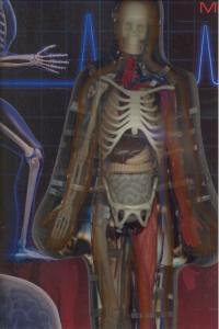 El Cuerpo Humano XL